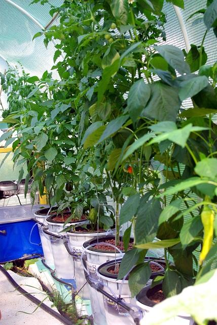 Garden50_days.JPG