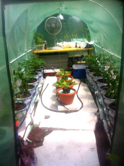 Plants-7-29-15.JPG