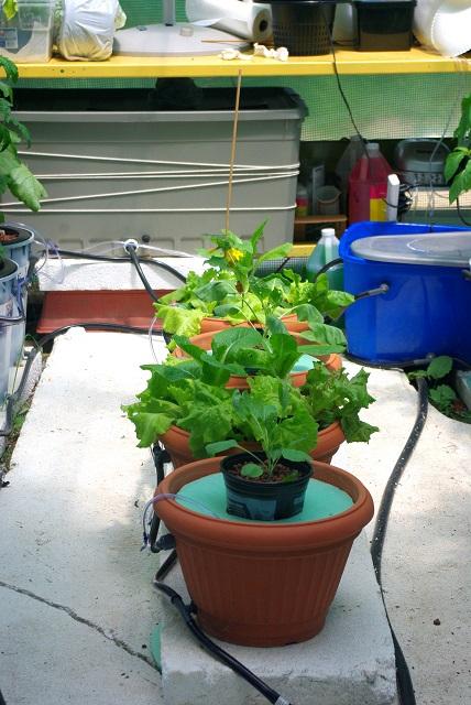 Plants2-8-3-15.JPG
