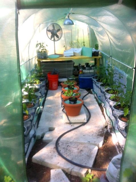Seedlings7-21-15.JPG
