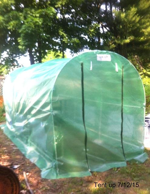 Tent-7-06-15.JPG
